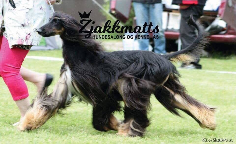 Zjakkmatts Hundesalong og Kennel AS