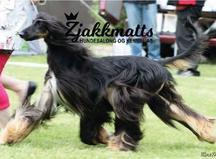 Zjakkmatts Hundesalong og Kennel AS